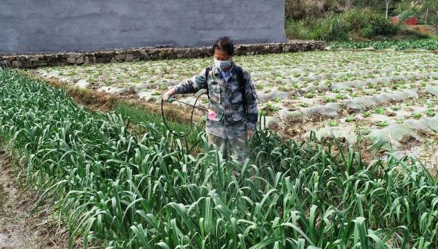 蕉城区有序开展春耕备耕工作
